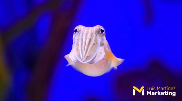 Calamar de Humbolt Ventaja Competitiva Pymes